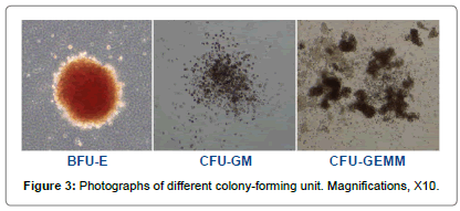 cytology-histology-colony-forming-unit