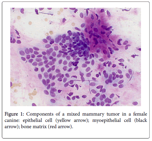 cytology-histology-components