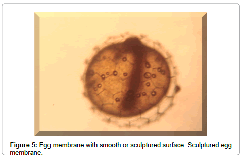cytology-histology-egg