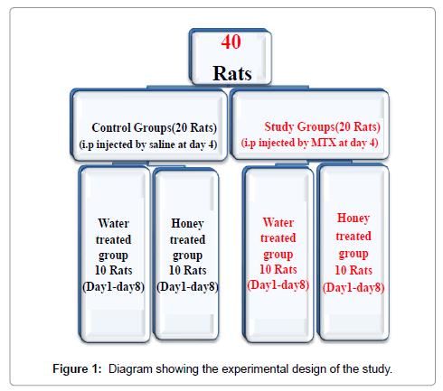 cytology-histology-experimental