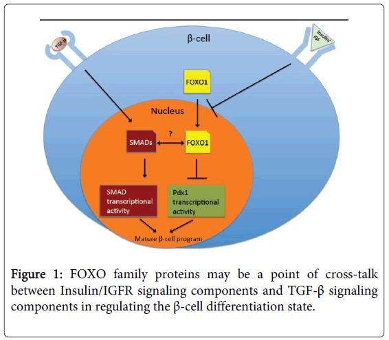 cytology-histology-proteins