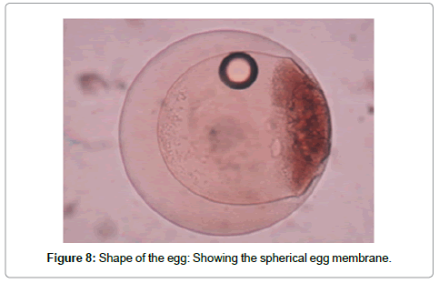 cytology-histology-spherical