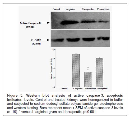 cytology-histology-western-blot