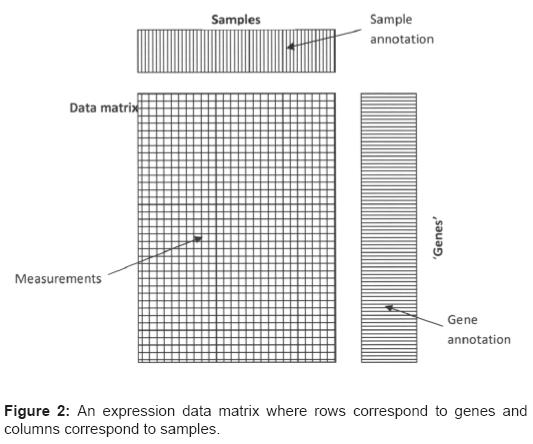 data-mining-genomics-expression-data-matrix