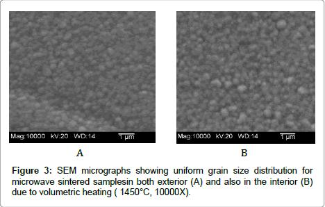 dentistry-SEM-micrographs