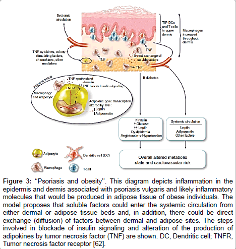 dermatology-case-reports-diagram-depicts
