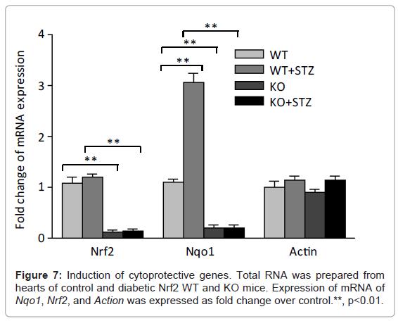diabetes-metabolism-Induction-cytoprotective-genes