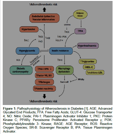 diabetes-metabolism-Pathophysiology-Atherosclerosis-Diabetes