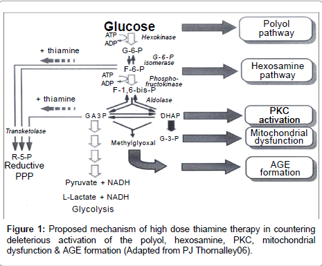 diabetes-metabolism-Proposed-mechanism