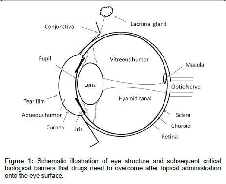 diabetes-metabolism-Schematic-illustration