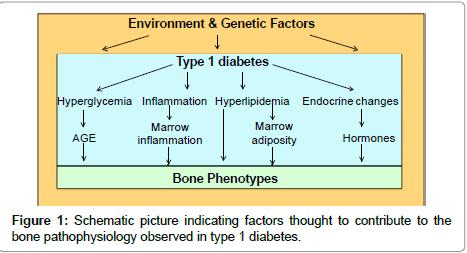 diabetes-metabolism-Schematic-picture