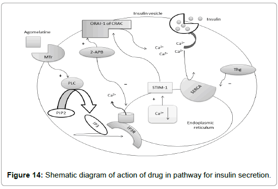diabetes-metabolism-Shematic-diagram