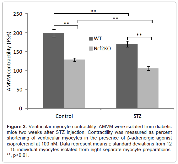 diabetes-metabolism-Ventricular-myocyte-contractility