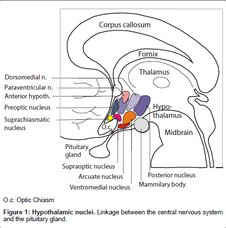 diabetes-metabolism-central-nervous