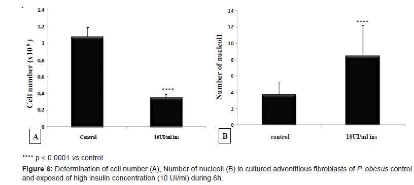 diabetes-metabolism-cultured-adventitious-fibroblasts