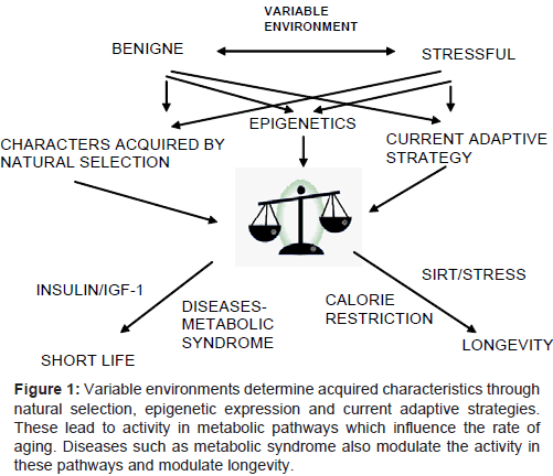 diabetes-metabolism-environments-determine-acquired-characteristics