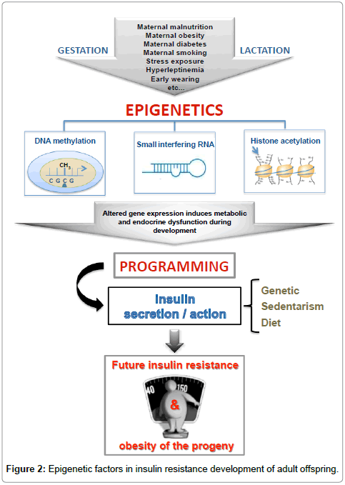 diabetes-metabolism-epigenetic-factors
