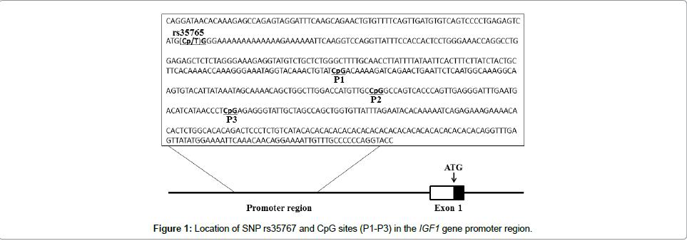 diabetes-metabolism-gene-promoter