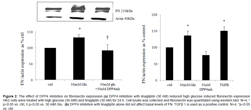 diabetes-metabolism-inhibition-fibronectin-expression