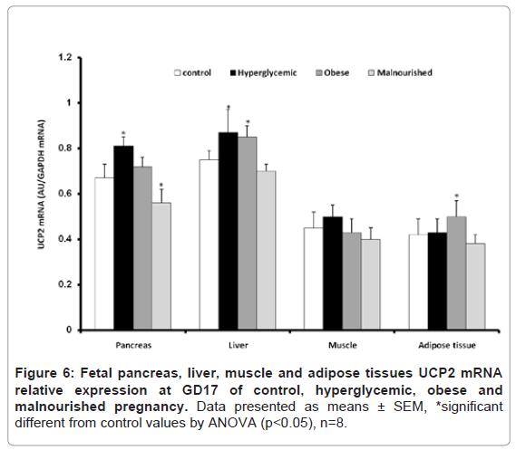 diabetes-metabolism-malnourished-pregnancy