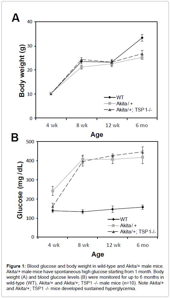 diabetes-metabolism-wild-type