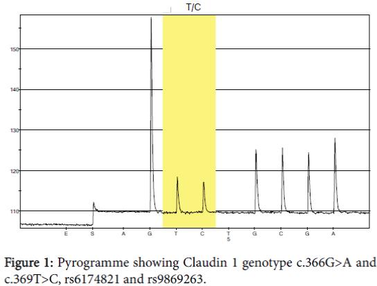 diagnostic-pathology-Claudin