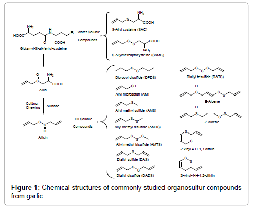 drug-metabolism-Chemical-structures