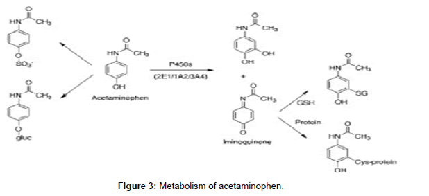 drug-metabolism-toxicology-acetaminophen