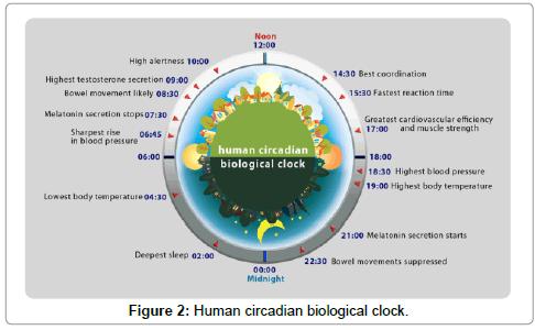 drug-metabolism-toxicology-clock
