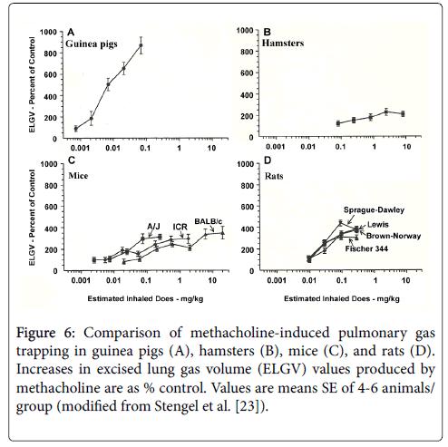 drug-metabolism-toxicology-hamsters