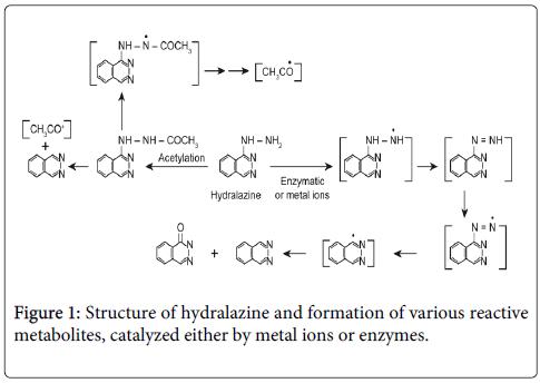 drug-metabolism-toxicology-hydralazine