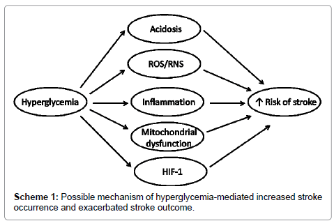 drug-metabolism-toxicology-hyperglycemia-mediated