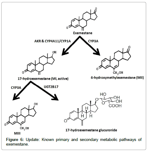 drug-metabolism-toxicology-metabolic-pathways