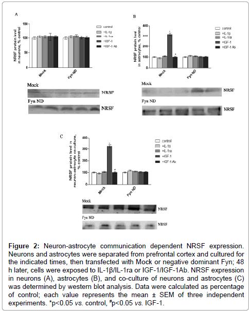 drug-metabolism-toxicology-neuron-astrocyte