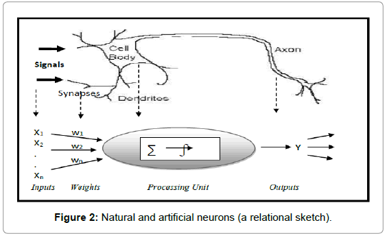 economics-and-management-Natural-artificial-neurons
