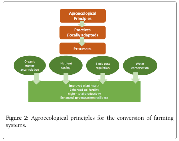 ecosystem-ecography-Agroecological-principles
