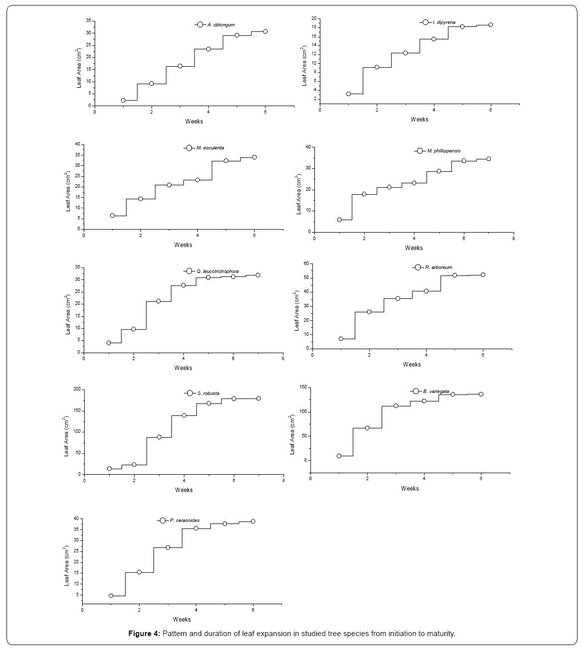 ecosystem-ecography-leaf-expansion