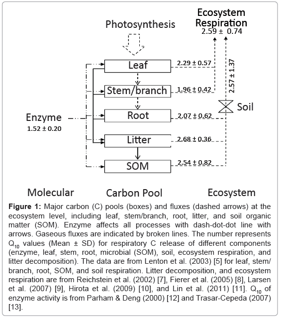 ecosystem-ecography-major-carbon-pools