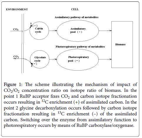 ecosystem-ecography-mechanism