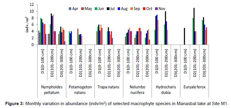 ecosystem-ecography-monthly-abundance-site-m1