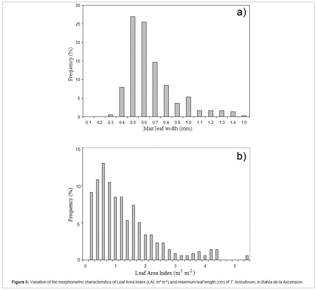 ecosystem-ecography-morphometric-characteristics-leaf