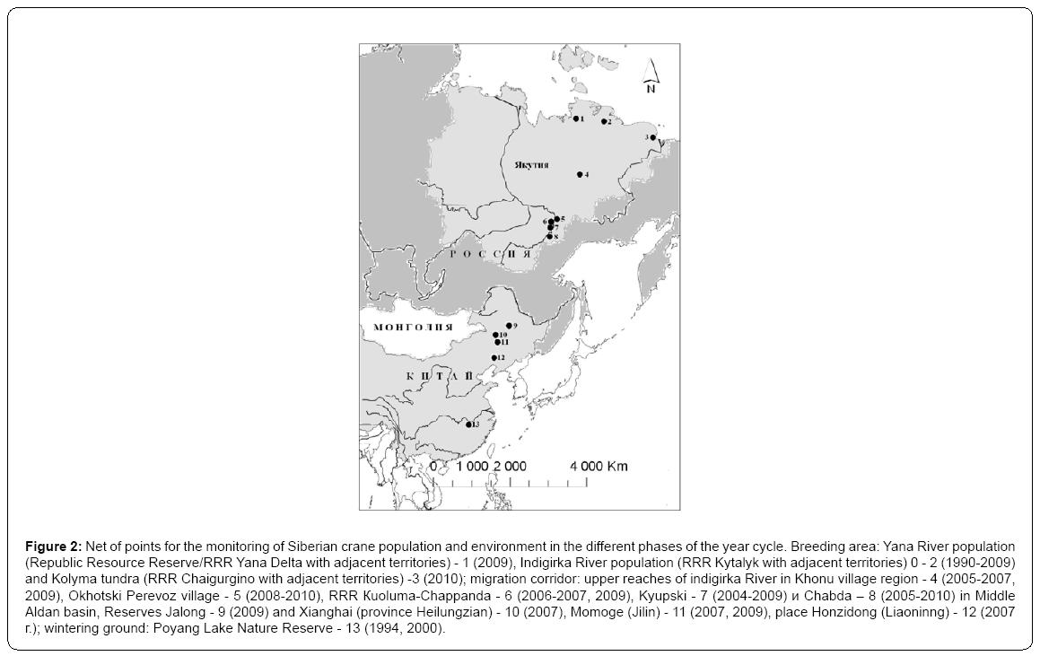 ecosystem-ecography-siberian-crane-population