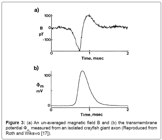 compound action potential