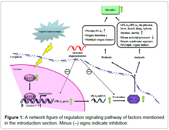 emergency-medicine-a-network-figure-regulation