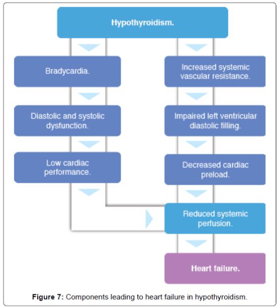 endocrinology-metabolic-syndrome-heart-failure-hypothyroidism