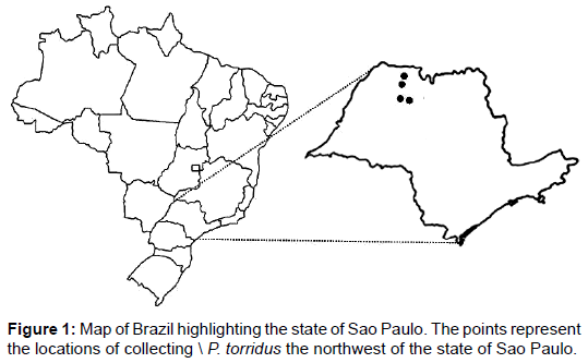 entomology-ornithology-herpetology-Brazil-highlighting