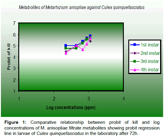 entomology-ornithology-herpetology-Culex-quinquefasciatus