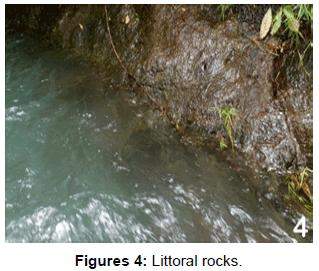 entomology-ornithology-herpetology-Littoral-rocks