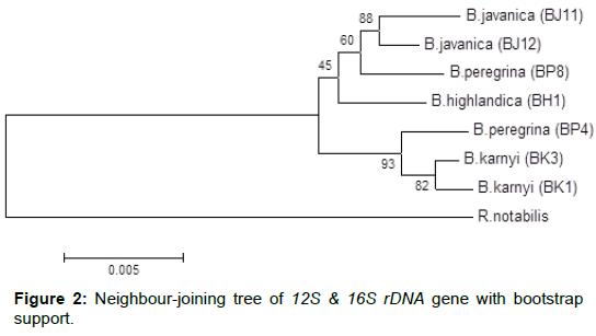 entomology-ornithology-herpetology-Neighbour-joining-tree
