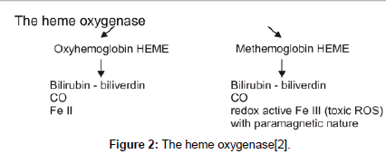 environmental-analytical-chemistry-heme-oxygenase